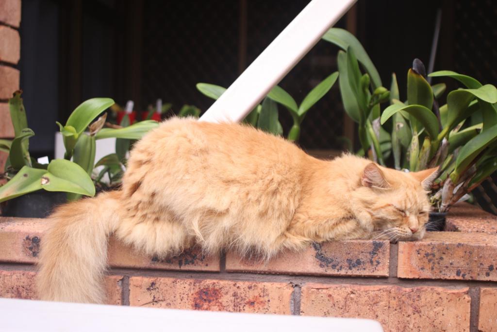 ginger cat-gingercat3_18-dec2020-jpg