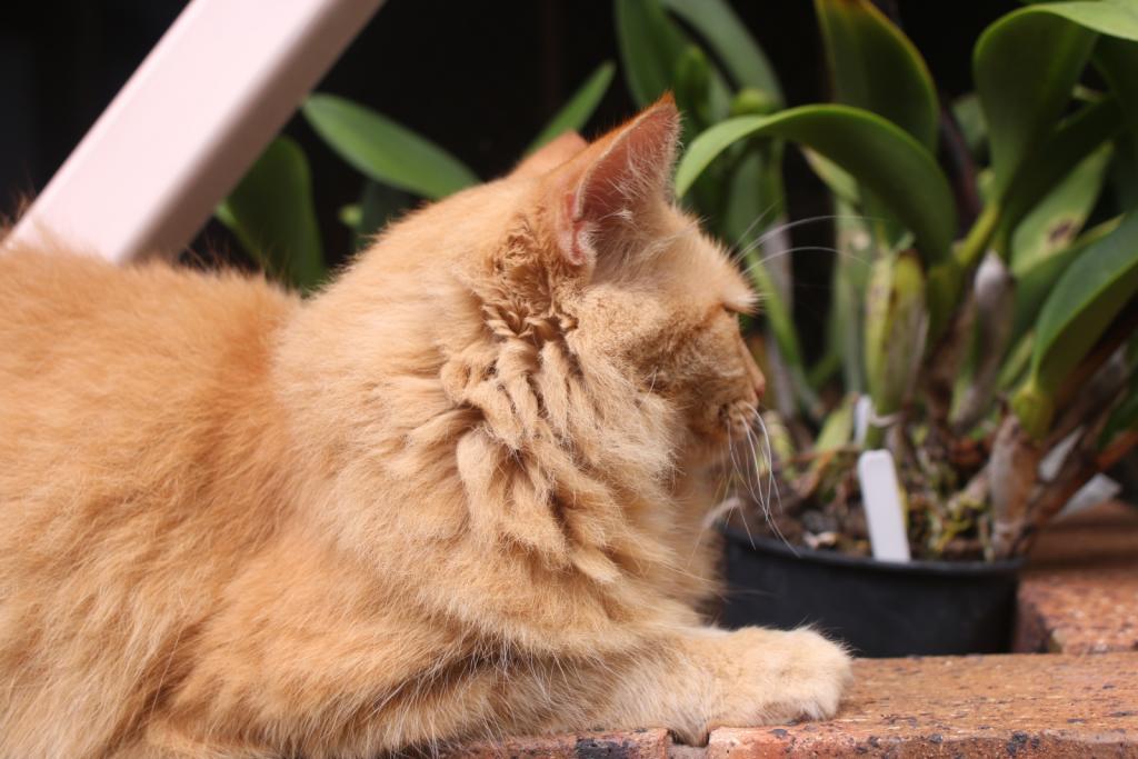 ginger cat-gingercat4_18-dec2020-jpg