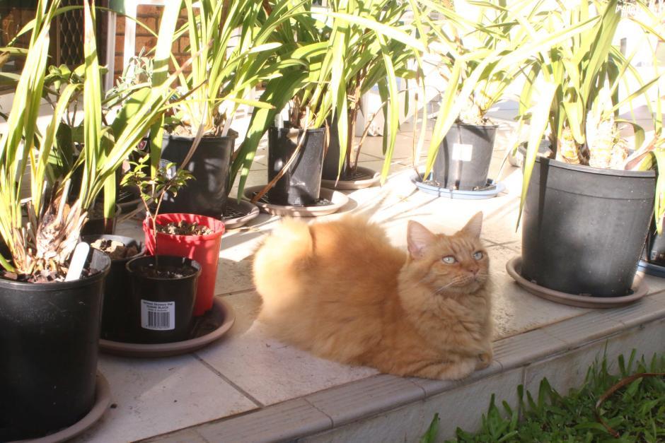 ginger cat-gingercat_12-mar2021-jpg