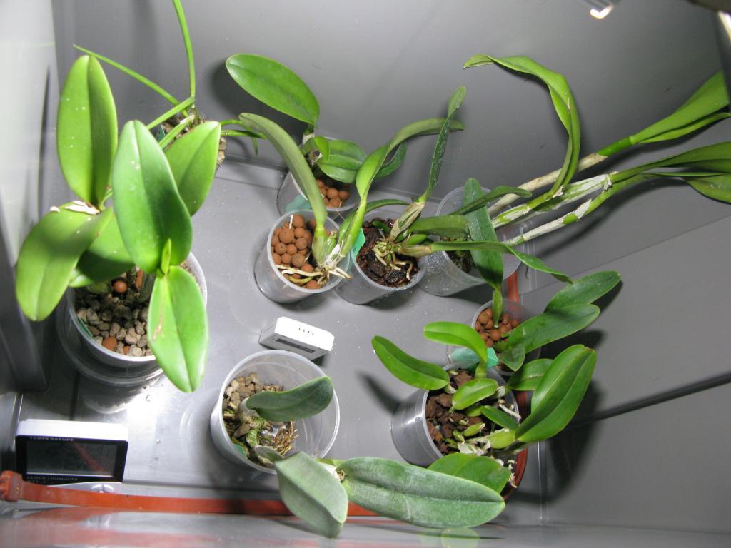 Spiceotics plants UK-img_0576-jpg