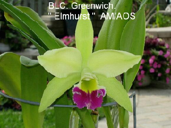 "BLC Greenwich ""Elmhurst"" - size?-img_0959-jpg"
