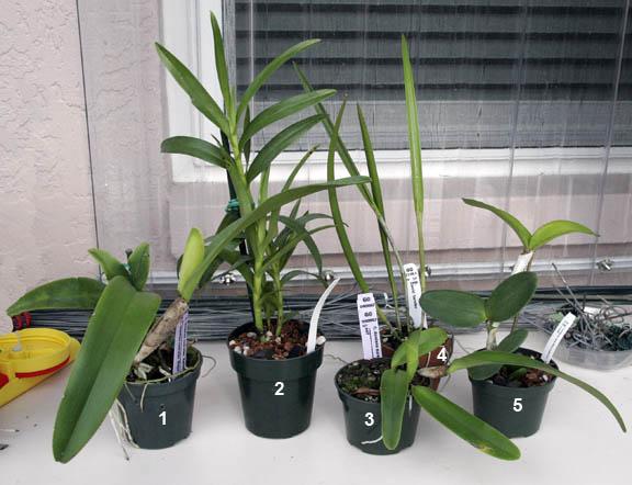 Plantio La Orquidea in Sarasota, Florida-plantio_la_orquidea_ob-jpg