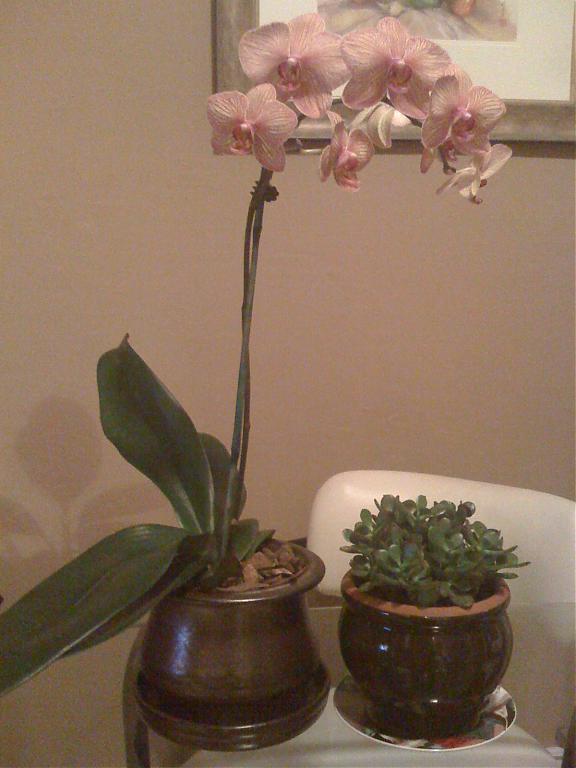 How to trim my Phalaenopsis...-img_0064-jpg