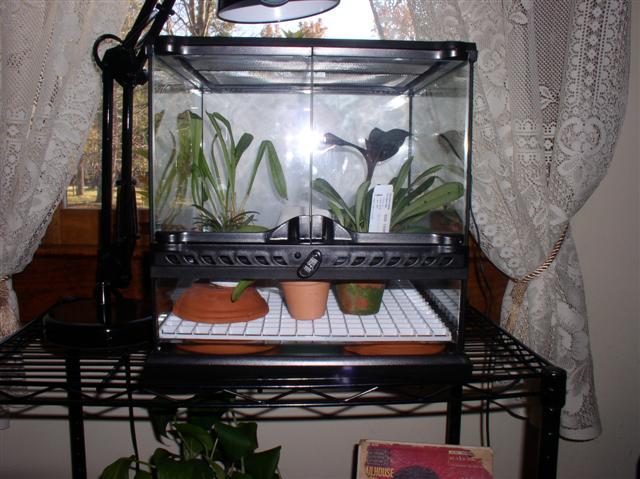 My new Exo Terra tank-orchidarium4-jpg