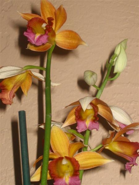 In bloom on 1/10/09-100-0051_img-medium-jpg
