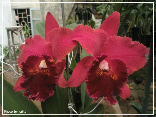 Blc Chialin Beauty-chialin-beauty1-jpg
