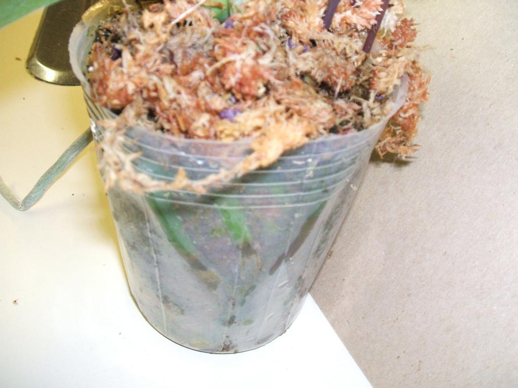 Type of pot for Phalaenopsis-orchid-inner-pot-479-jpg