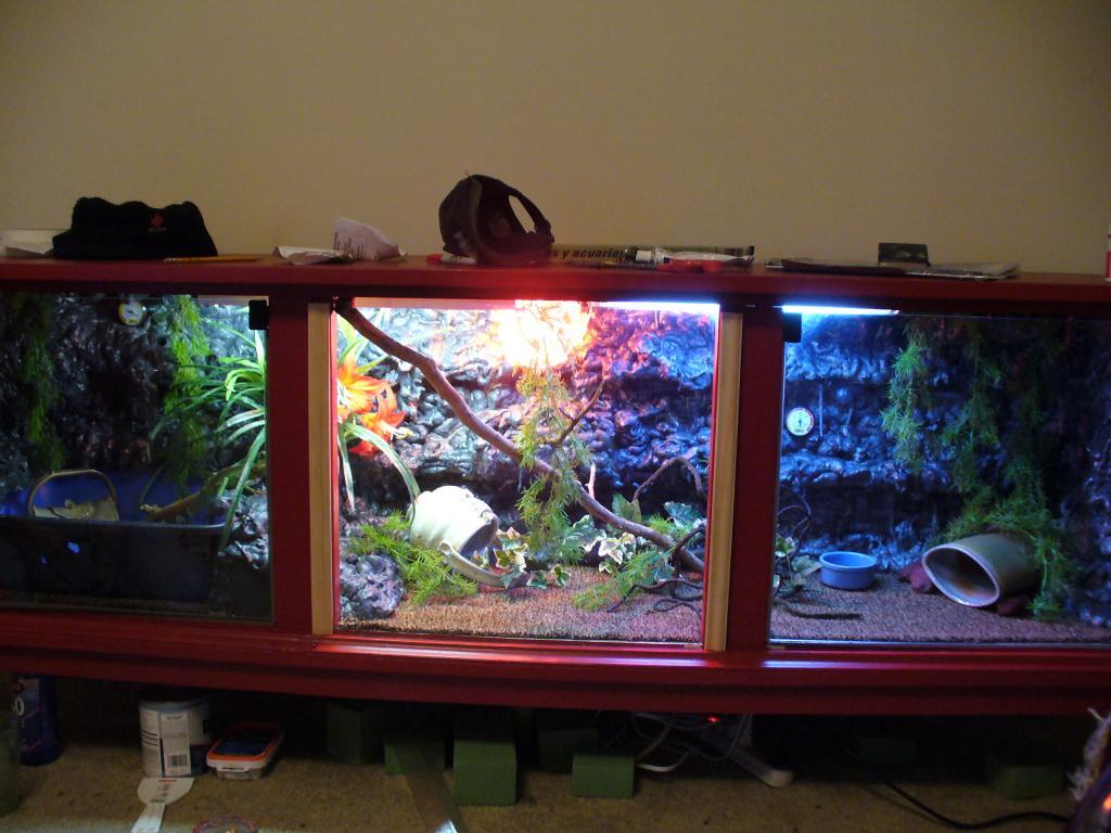 pets-013-jpg terrarium for lizard...done! - Terrarium For Lizard...done! - Orchid Board - Most Complete Orchid