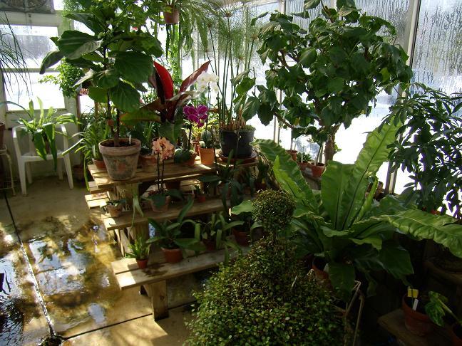 My Growing Area / Greenhouse-rightback1-jpg