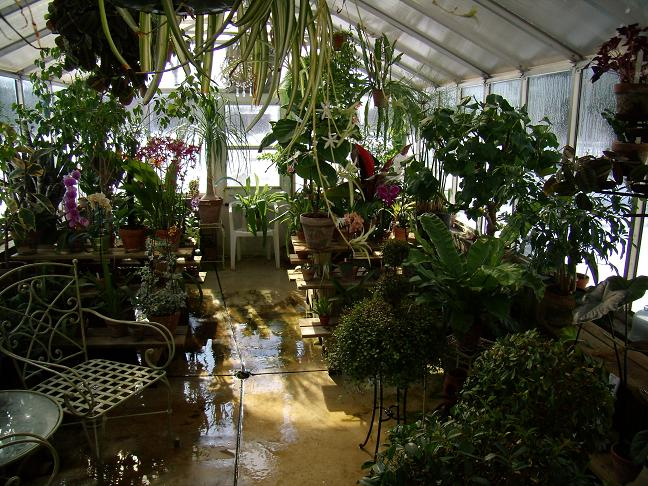 My Growing Area / Greenhouse-backmiddle1-jpg