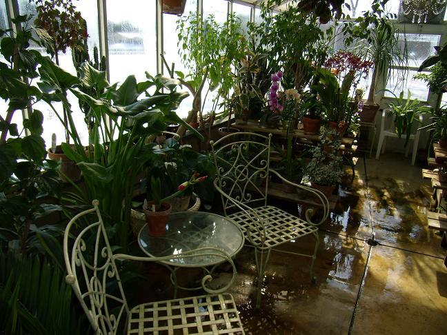 My Growing Area / Greenhouse-leftback1-jpg