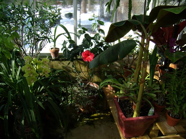 My Growing Area / Greenhouse-rightfront1-jpg
