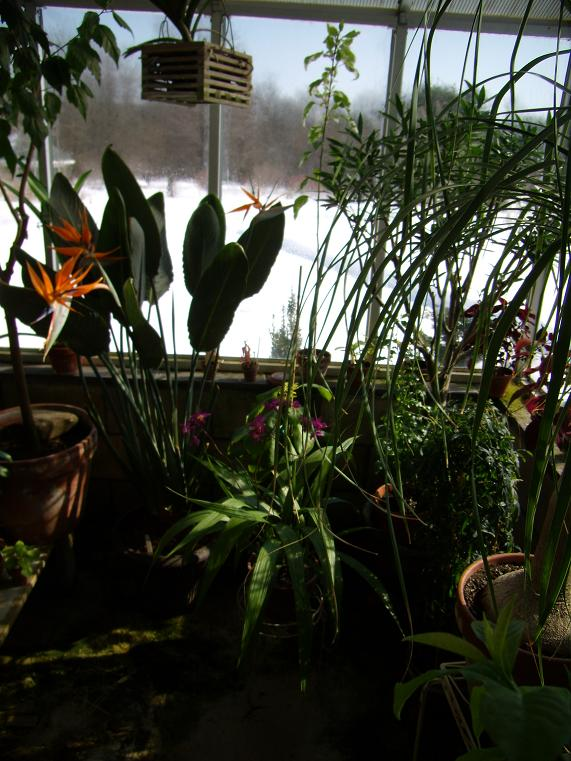 My Growing Area / Greenhouse-leftfront2-jpg