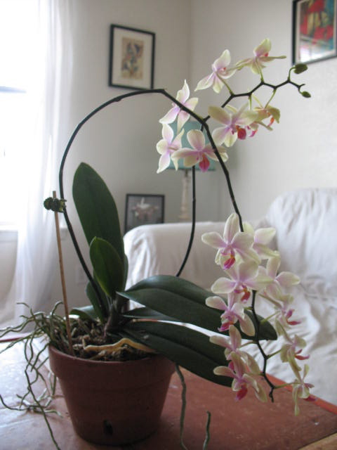 New Orchid enclosure...-img_3362-jpg