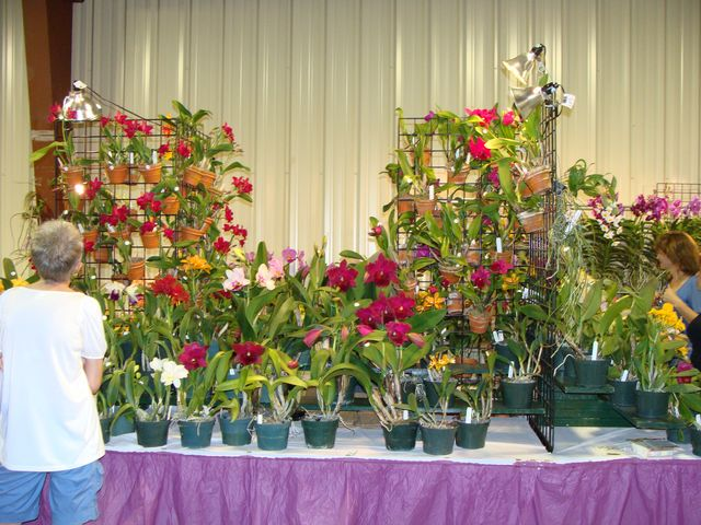 Central FL Orchid Show-chids-007-640x480-jpg
