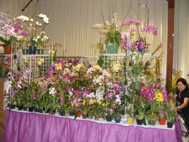 Central FL Orchid Show-chids-009-640x480-jpg