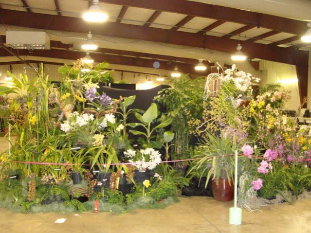 Central FL Orchid Show-chids-011-640x480-jpg
