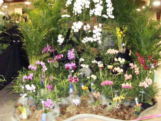 Central FL Orchid Show-chids-012-640x480-jpg