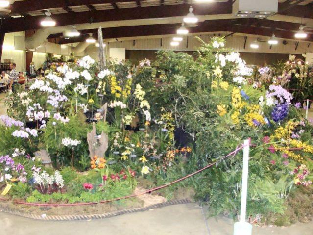 Central FL Orchid Show-chids-015-640x480-jpg