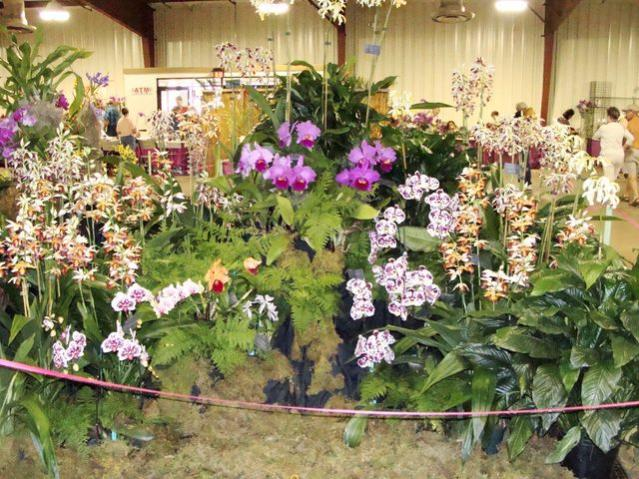 Central FL Orchid Show-chids-016-640x480-jpg