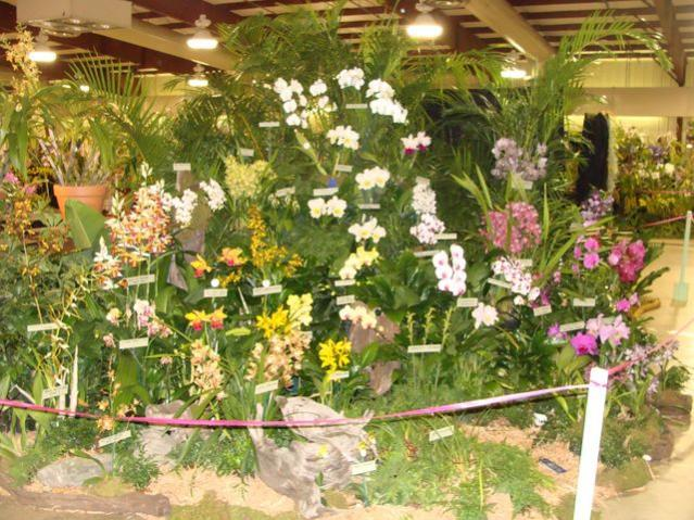 Central FL Orchid Show-chids-017-640x480-jpg