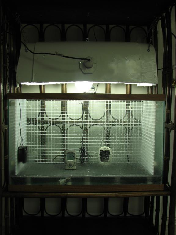 Same old aquarium to orchidarium trick............-img_5450-jpg