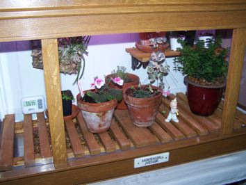 Homebuilt Wardian Case for small special plants-100_2095-jpg