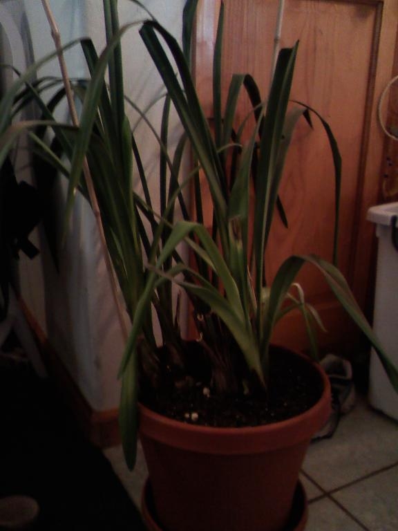 How to tell what type of Orchid I have and how to care for it-orchid-1-jpg