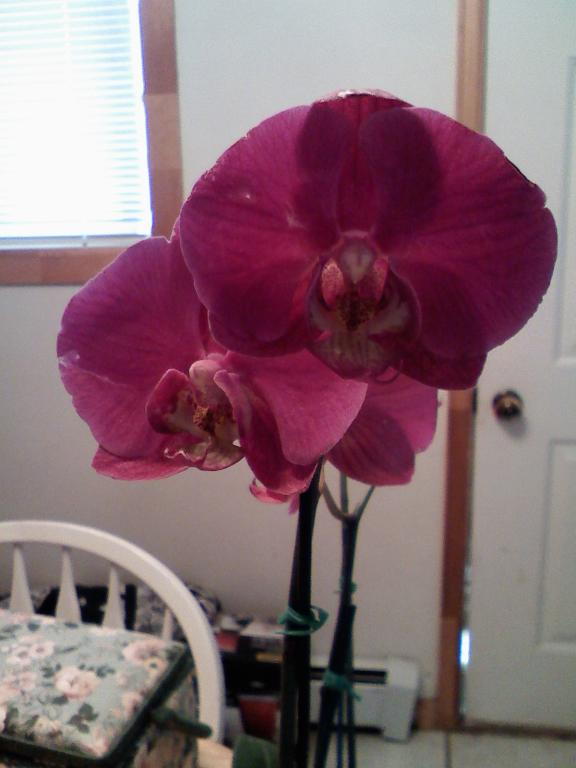 How to tell what type of Orchid I have and how to care for it-orchid-2-jpg
