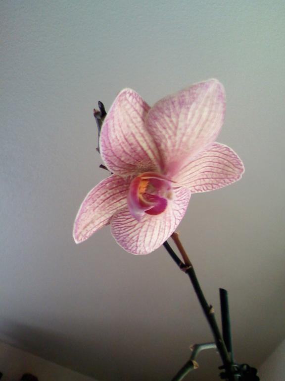 How to tell what type of Orchid I have and how to care for it-orchid-3-jpg