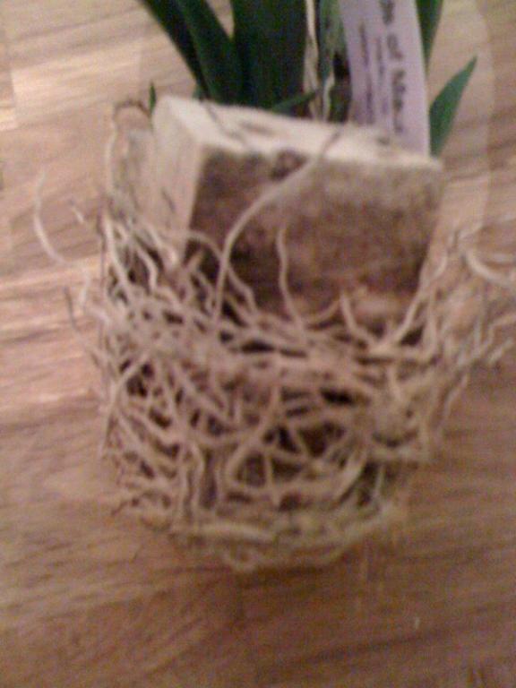Need Help with my Oncidium Hybrid-roots-mount-jpg