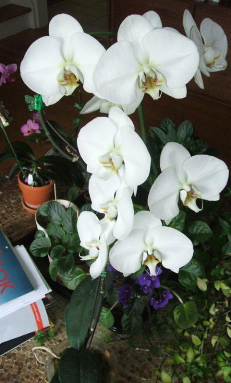 Type of pot for Phalaenopsis-t722-white-phal-sm-jpg