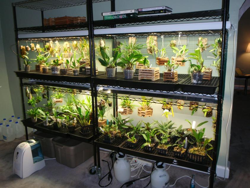 Setting Up Small Growing Area With Lights Orchid Board