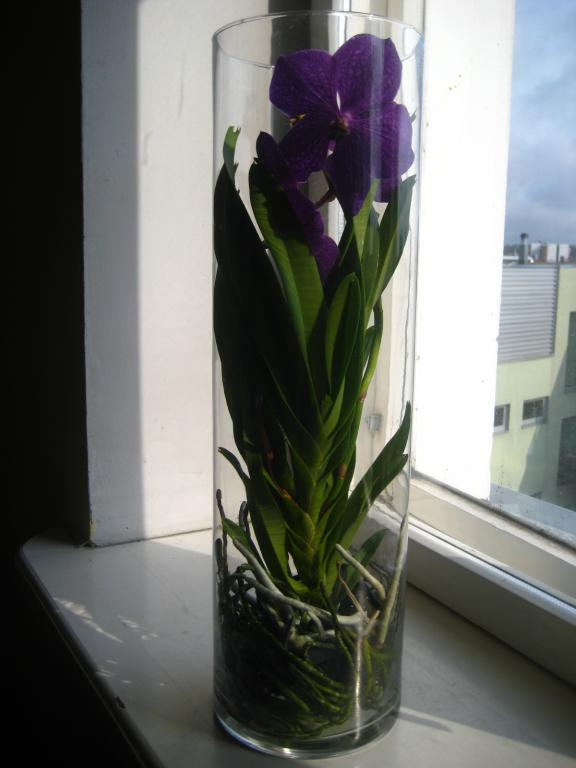 Vandas in Glass Vases-img_6376-jpg
