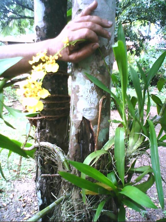 Landscaping With Orchids-img0020a-jpg