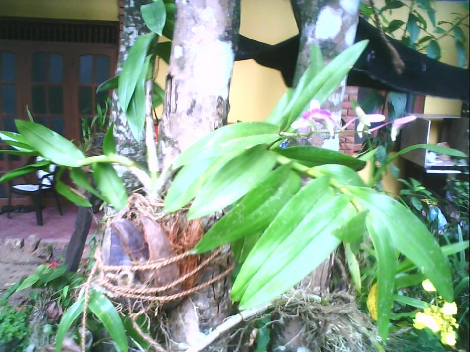 Landscaping With Orchids-img0021a-jpg