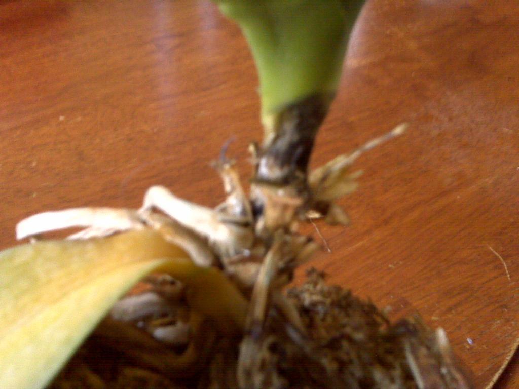 Leaves fell off!-img00245-jpg