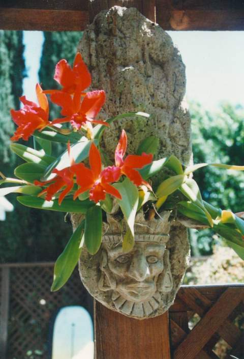 Cement based orchid growing plaque-orchid-aztec-plaque-1-jpg