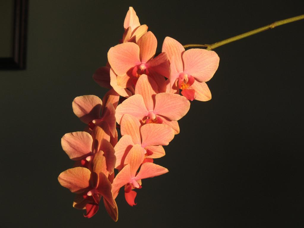 2012 OrchidBoard Calendar Contest-img_0600-jpg