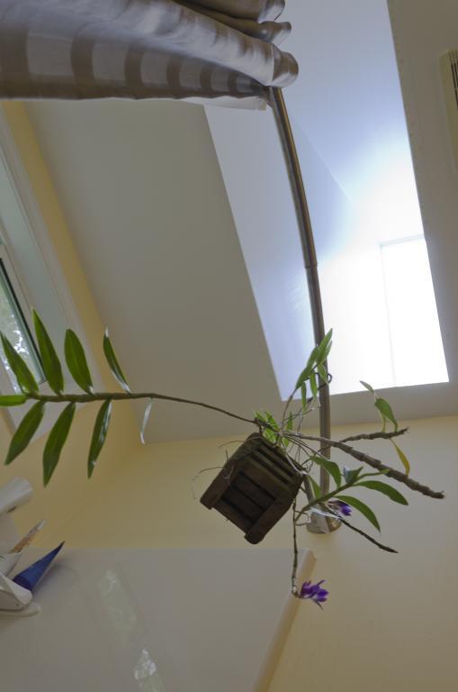 Dendrobium (victoriae-reginae) - Yellowing leaves-current-enviornment-jpg