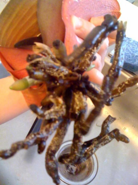 Why are my roots dying?-photo-3-jpg