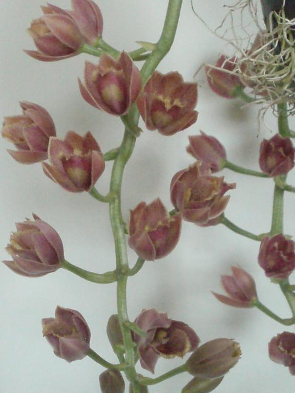 new orchid in bloom-001-jpg