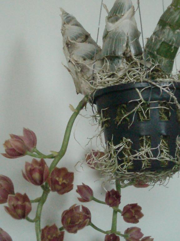 new orchid in bloom-002-jpg