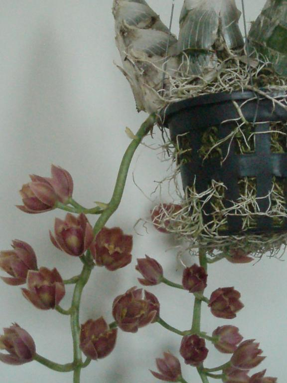new orchid in bloom-003-jpg