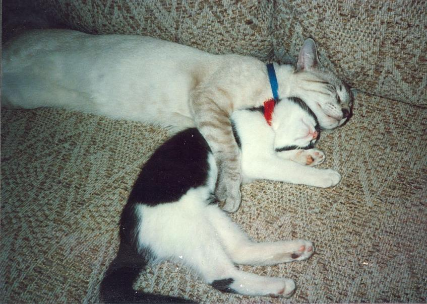 My two cats :)-ulysses-crosby-1-1990-jpg