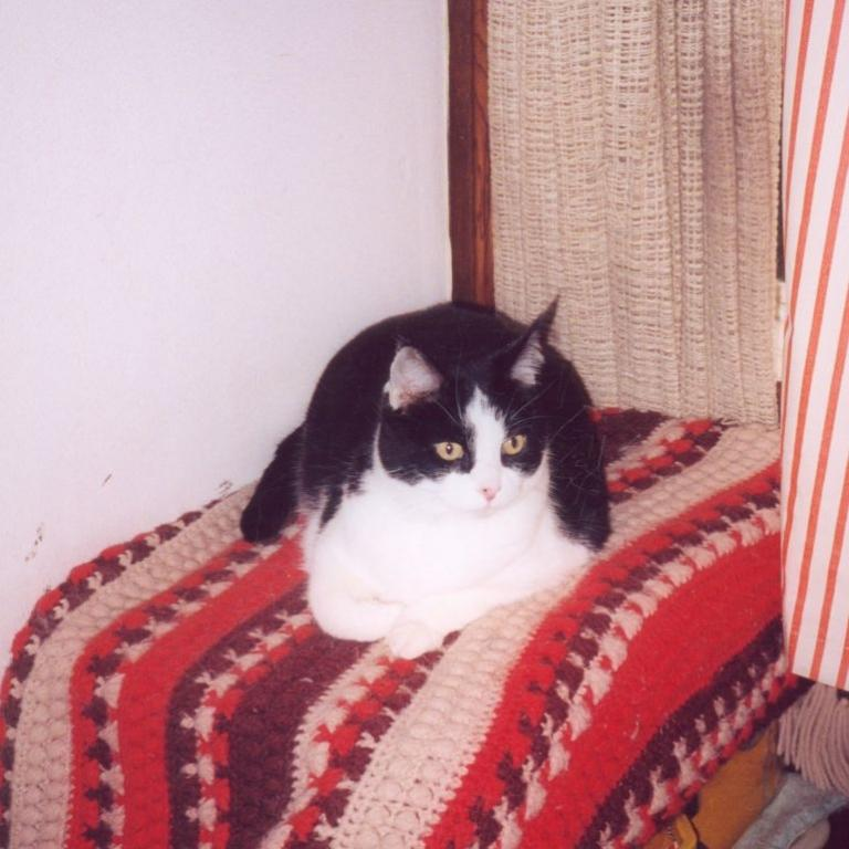 My two cats :)-crosby-2000-1-jpg