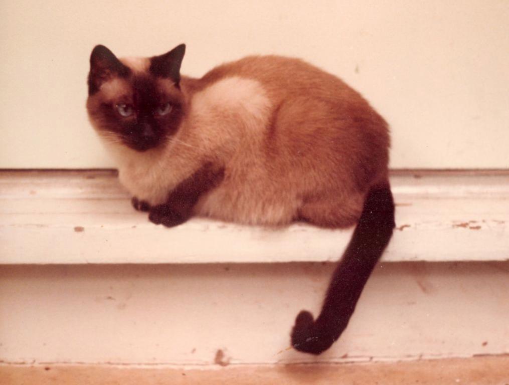 My two cats :)-capucine-jpg