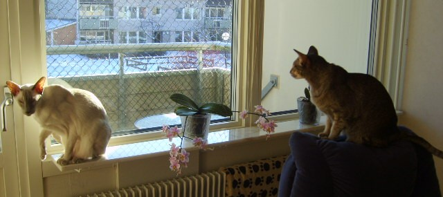 My two cats :)-jpg