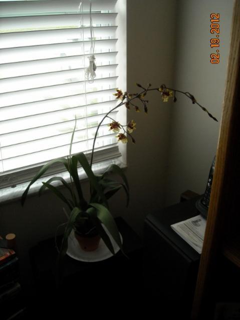 My dancing Lady Blooming-dscn2259-480x640-jpg