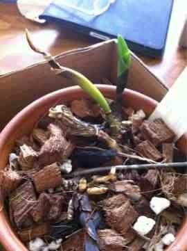 Cattleya keeps self destructing-imageuploadedbytapatalk1331939085-771580-jpg